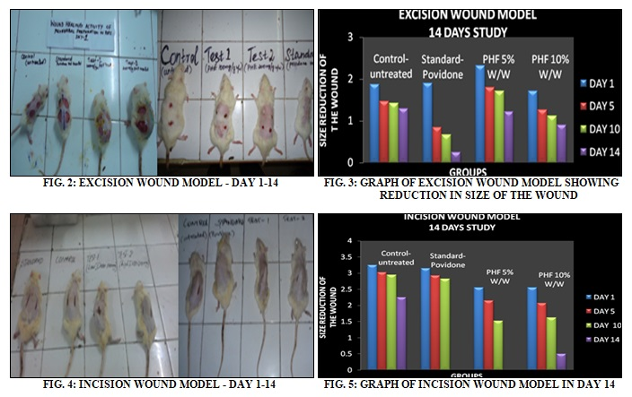 POLY HERBAL SEMISOLID DOSAGE FORM DEVELOPMENT FOR WOUND